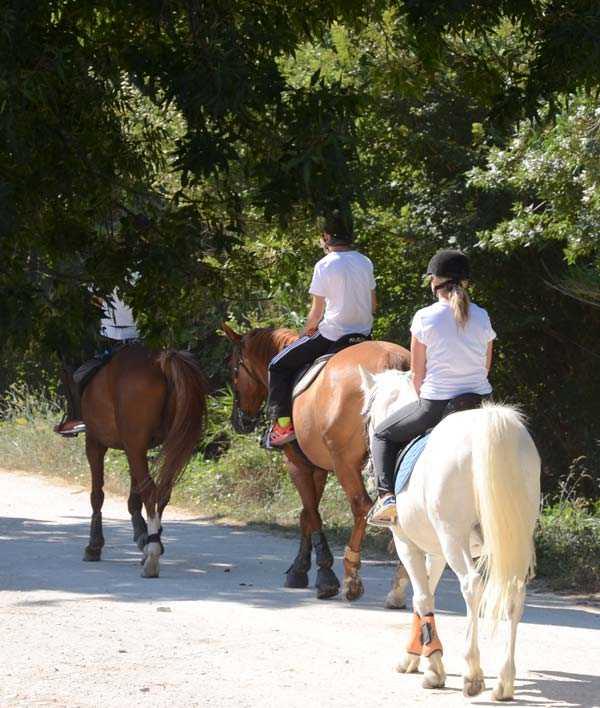 Centre équestre Nîmes : départ en balade à cheval