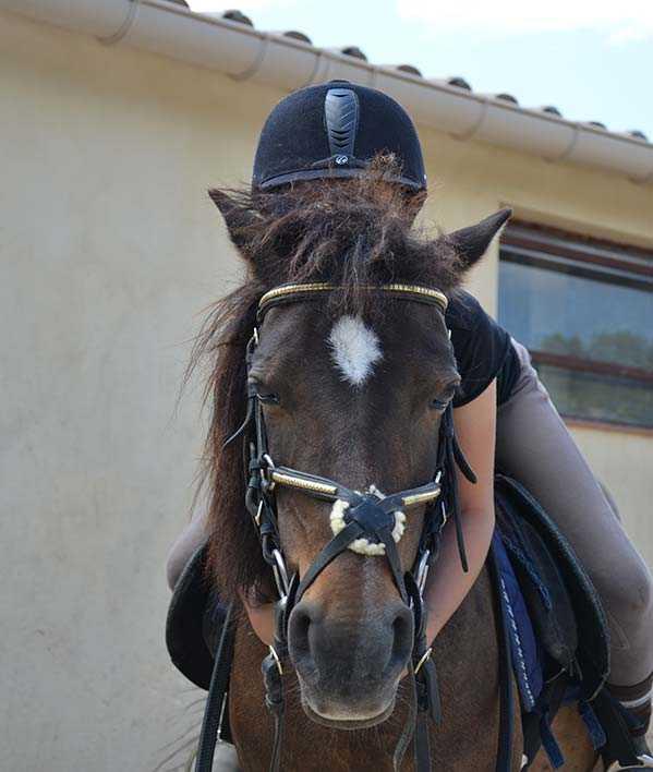 Centre équestre Nîmes : l'amour du cheval