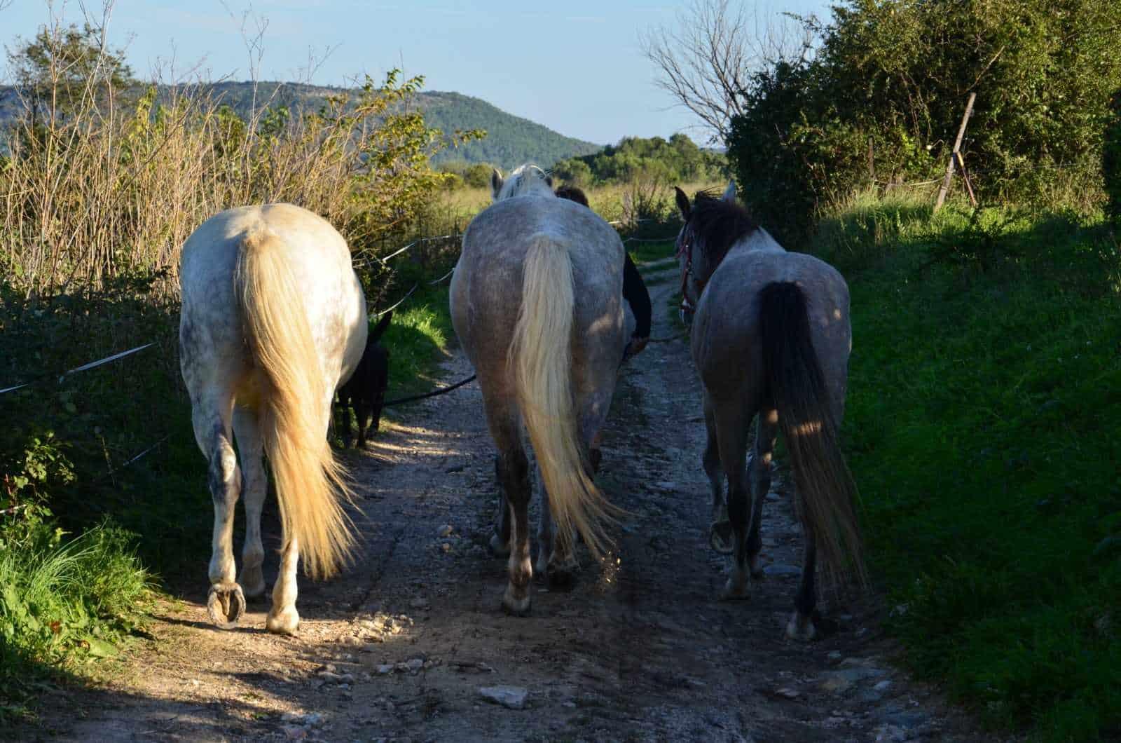 chevaux dem 1, Domaine équestre de Maruejols