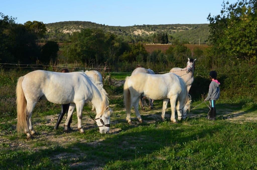 Pensions chevaux, domaine équestre de Maruejols