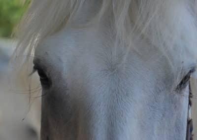 chevaux, Domaine équestre de Maruejols