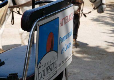 attelage dem 1 900, Domaine équestre de Maruejols