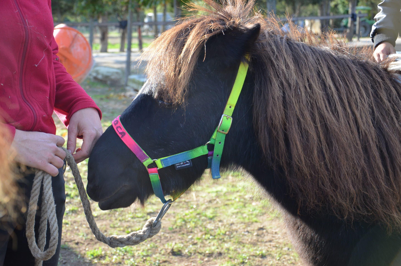 poney dem 1 scaled e1577642894399, Domaine équestre de Maruejols