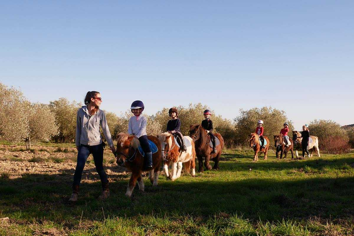Disciplines équestres, poney, balade