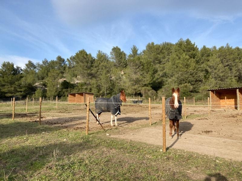 Pension cheval environnement, domaine équestre de Maruéjols
